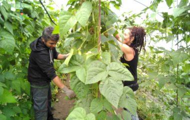 Vuelven el voluntariado wwoffer a Finca El Cabillón y Fundación Edes