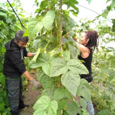 El voluntariado de Wwoof España viene a Finca El Cabillón a aprender