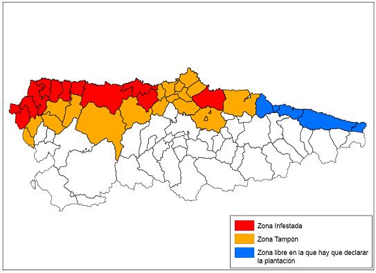 El Principado ajusta la declaración de zona infestada por la polilla guatemalteca en trece concejos y establece zonas tampón en otros catorce