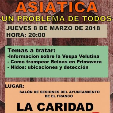 Charla sobre la avispa asiática en A Caridá (El Franco)