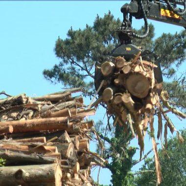 El PP de Lugo solicita al gobierno que autorice el desplazamiento de propietari@s de terrenos forestales para el marcado, inicio y control de las cortas