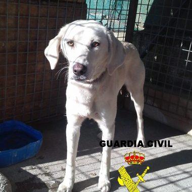 La Guardia Civil actúa contra el maltrato animal por abandono