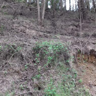 La Coordinadora Ecologista de Asturias denuncia el vertido de purines en Concernoso (Valdés)