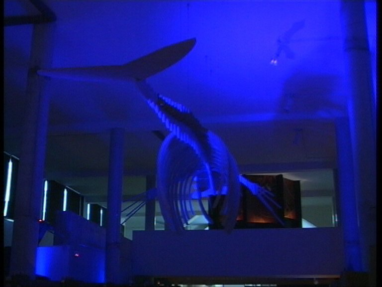 Navia solicita a Infraestructuras, la donación del esqueleto de la ballena izada a tierra en la dársena de Astilleros Armón