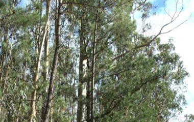 7,3 millones de euros en ayudas para fortalecer el sector forestal, apoyar el desarrollo de los montes y prevenir incendios