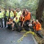 40 Jabalíes cobrados en los Cotos de la Comarca en las últimas Batidas
