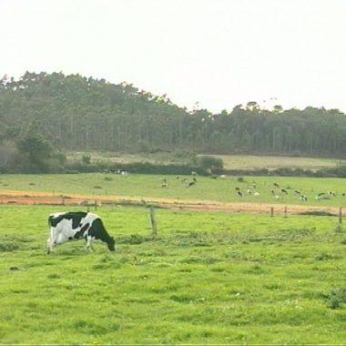 Desarrollo Rural convoca ayudas para la adquirir dispositivos GPS de localización y monitorización de ganado en régimen extensivo