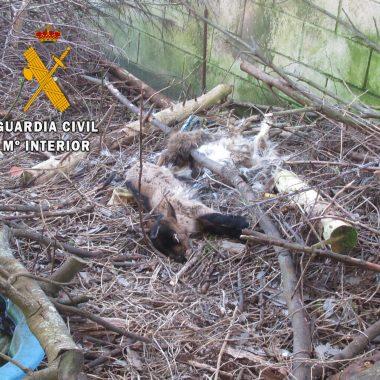 La Guardia Civil promueve el saneamiento de una finca en el casco urbano de El Franco