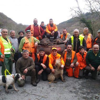 29 Jabalíes cobrados en las últimas batidas en los cotos de la Comarca