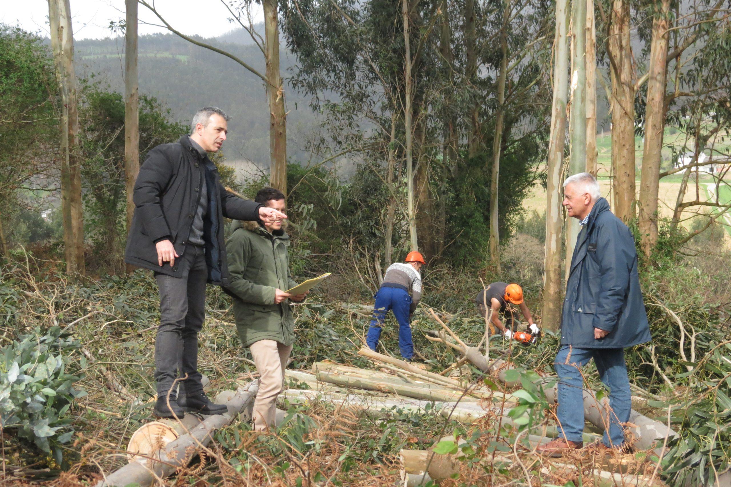 Ribadeo saca a licitación el contrato para un servicio de tratamiento de prevención de incendios forestales