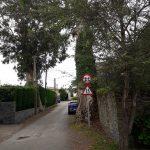 Un vecino de Villar (Valdés) denuncia el peligro que suponen dos eucaliptos cercanos a la carretera