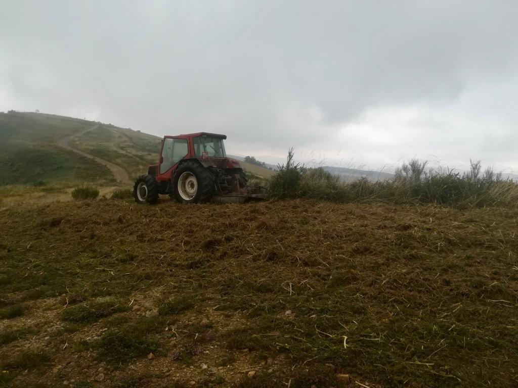 Comienzan los trabajos de desbroce para la protección contra incendios forestales en Cangas del Narcea