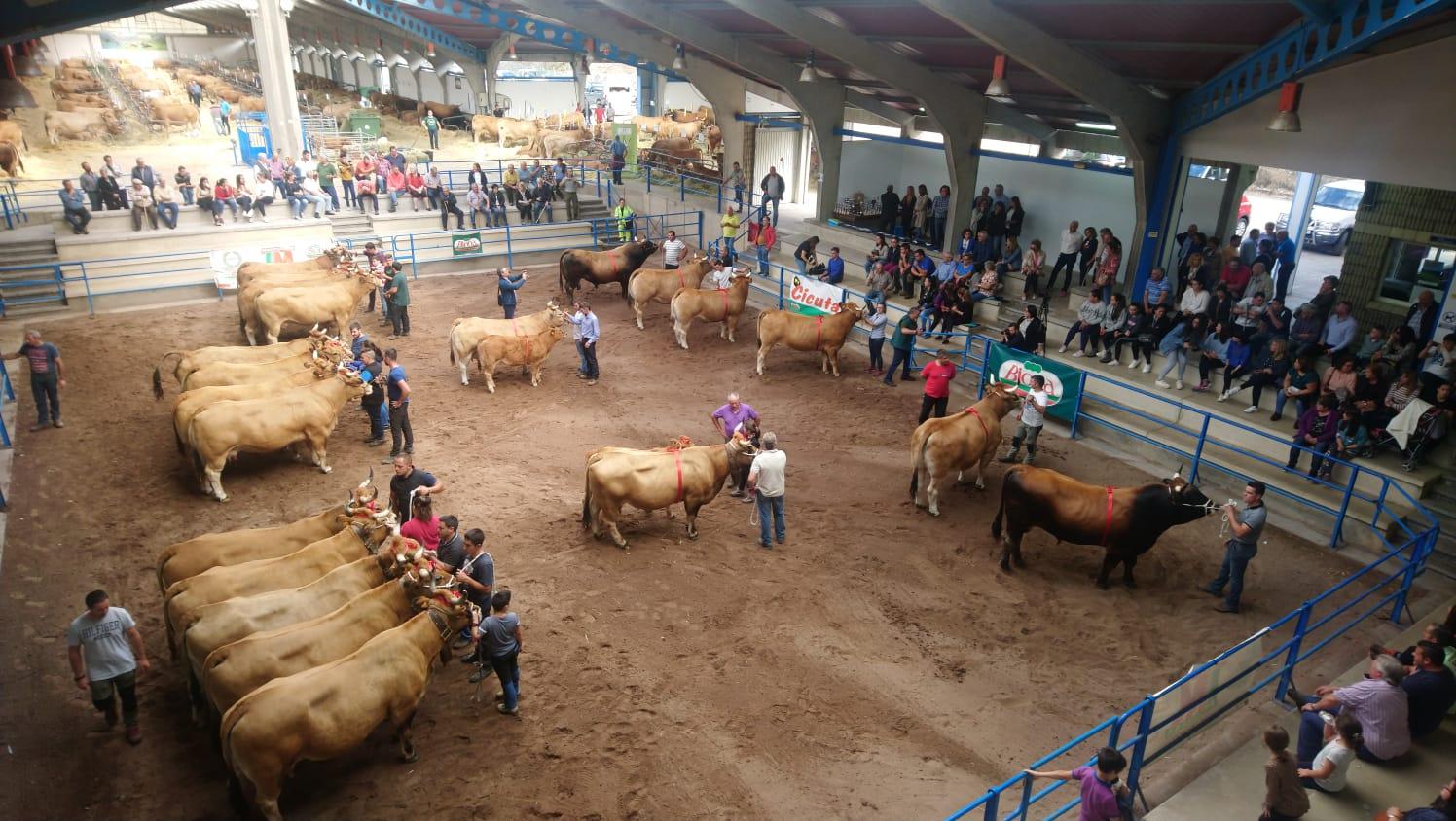 Cangas del Narcea retomará las ferias ganaderas de San Mateo y San Andrés y la Muestra Local de Raza Asturiana de los Valles