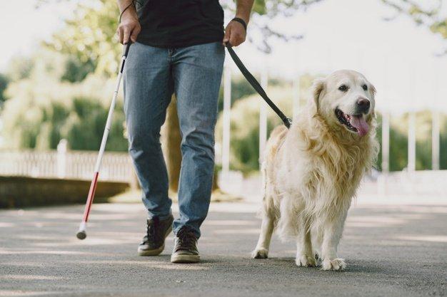 El proyecto de ley sobre perros de asistencia garantiza la entrada de las personas con discapacidad y sus canes en la mayoría de espacios con límite de acceso para animales