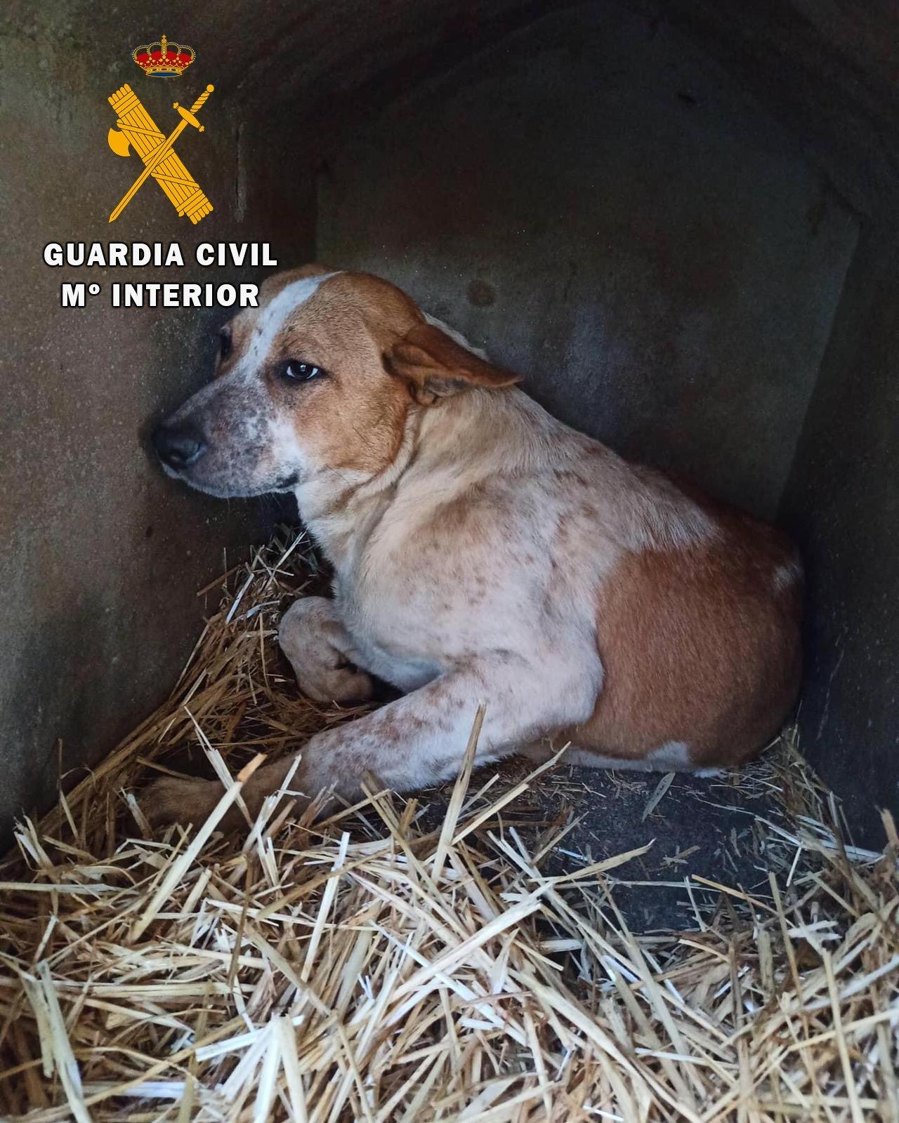 El SEPRONA investiga en Nafarea (Vegadeo) al supuesto autor de disparos a un cachorro de perro