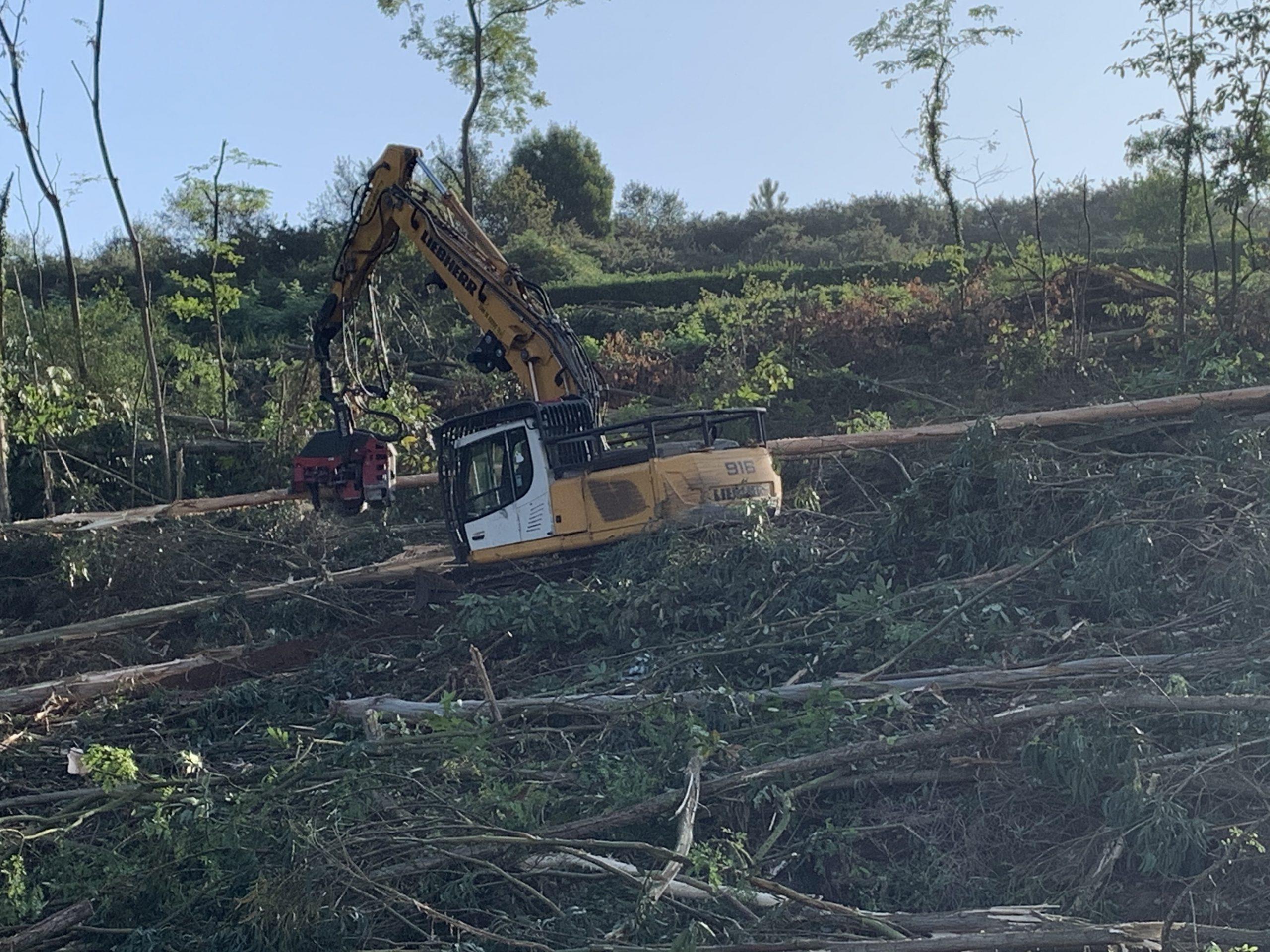 Disminuir los riesgos ante un eventual incendio forestal
