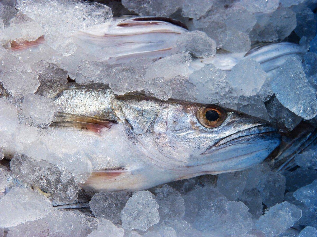 Los pesqueros asturianos verán reducida su cuota de merluza para 2021