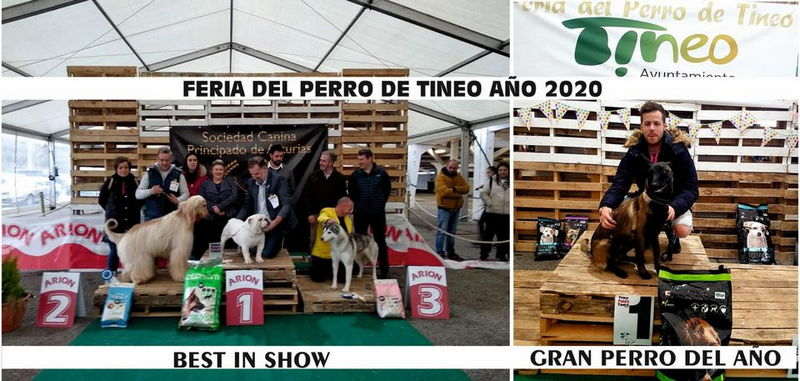 Cancelada la Feria del Perro de Tineo prevista para el 7 de Marzo