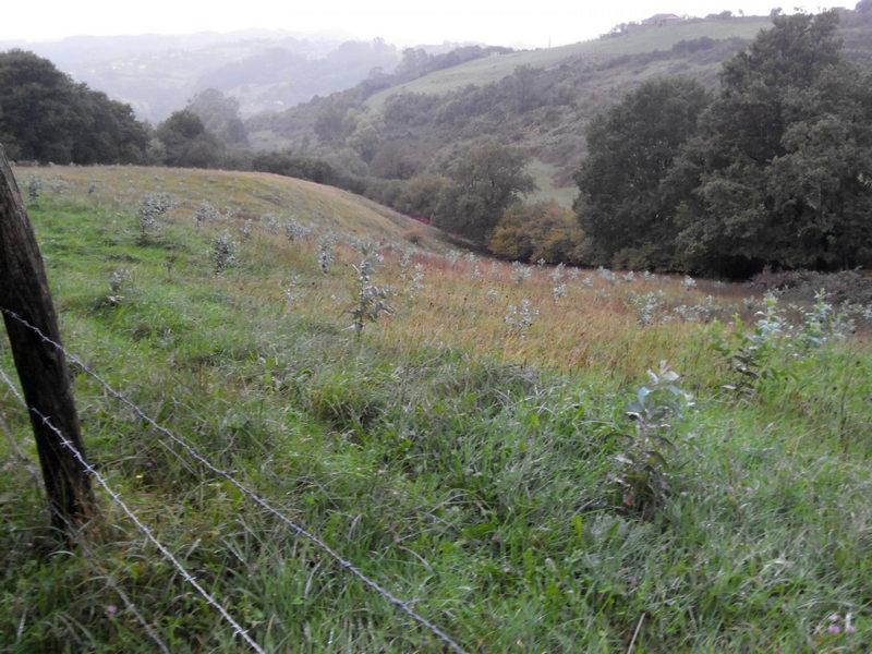 La Coordinadora Ecoloxista critica la nueva Ordenanza Municipal de Plantaciones de Taramundi
