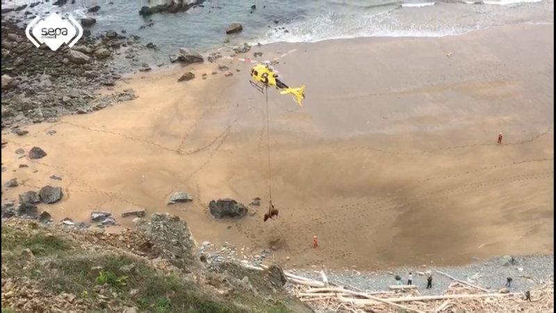 Rescate con el Helicóptero de Bomberos de Asturias de un Toro que se había caído a una playa de Gozón